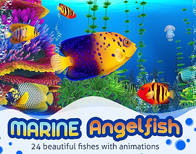 Marine Angelfish 3D asset