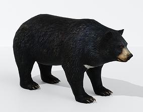 Bear Big 3D