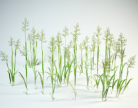 3D model grass set Festuca pratensis