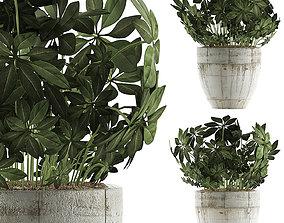 Plants Collection 61 3D