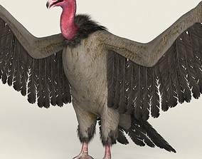 Low Poly Realistic Vulture 3D model