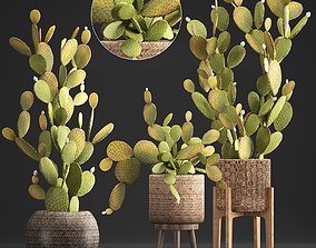 Collection of Exotic Cactus Plants 375 3D