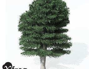 46 XfrogPlants Cutleaf European Beech 3D model
