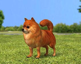 3D model Pomeranian