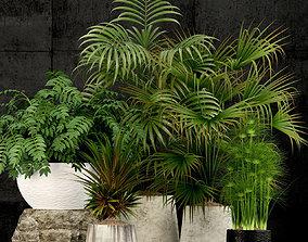3D Plants collection 53