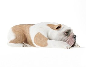 White And Brownish Bull Dog 3D model