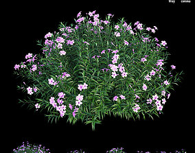 Ruellia brittoniana plant set 03 3D model