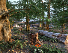 Trees Photoscanned Dawn Redwood Tree by Scanlabz 3D
