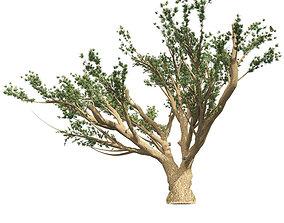 3D asset low-poly Cedar of Lebanon tree