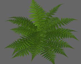 Tropical fern game-ready 3D asset