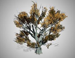 White Oak Fall Tree 3D model