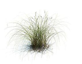 Wild Green Shrub Weed 3D