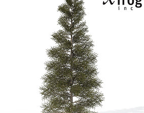 XfrogPlants Silver Fir 3D