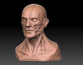 3D printable model Human Head Artistic Anatomy