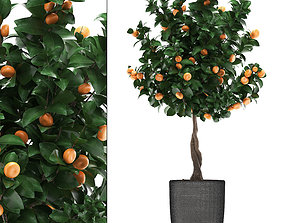 3D model Mandarin Tree with Fruit 2