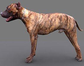3D model pitbull dog