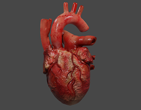 animated Human Heart Animated Low-poly 3D model