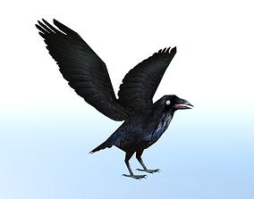3D model animated Crow Bird