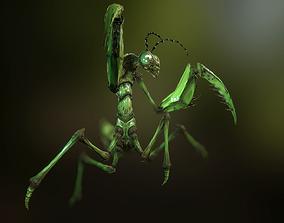 Praying Mantis 3D asset