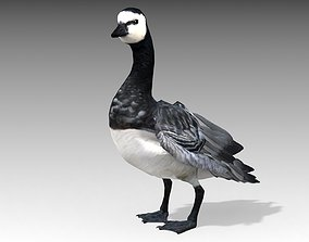 Barnacle Goose 3D model animated