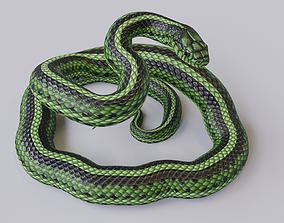 3D asset Rigged Green Snake