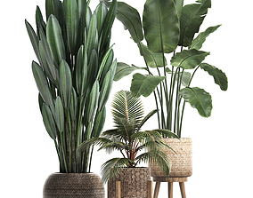 3D Collection of Exotic Plants 400