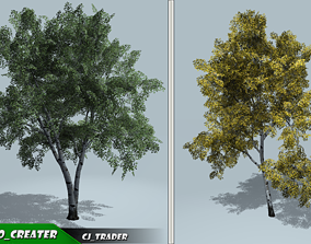 Tree European White Birch Collection Pack 3D VR / AR ready