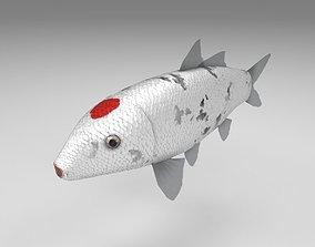 3D asset Carp koi fish