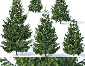Spruce Nr1 - Six sizes H1-3m 3D