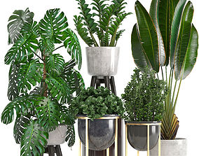Collection of ornamental plants in pots 3D