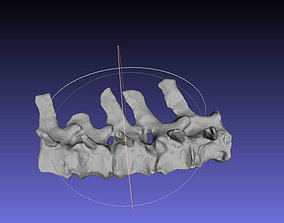 3D printable model Psittacosaurus Distal Caudal Vertebrae