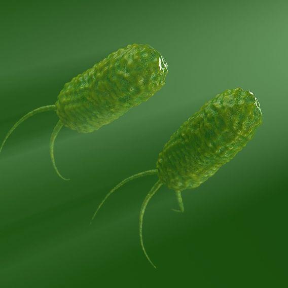 bacterium test render