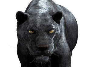 3D Panther-maya