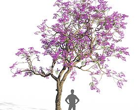 3D model Jacaranda mimosifolia