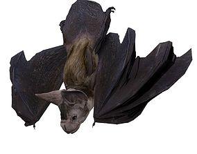 3D model Vampire Bat Animated