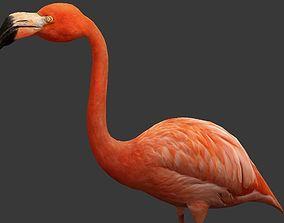 3D asset game-ready Flamingo