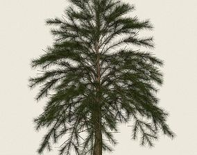 Game Ready Conifer Tree 08 3D model