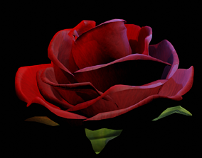 Rose - all colours 3D