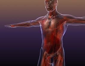 3D model Male Man Muscles Muscular System in Human Body