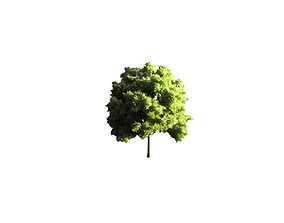 3D asset game-ready style Low Poly Tree Stylish