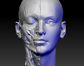 anatomy of the head 3D print model