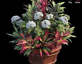 3D model Hydrangea in planters set 06