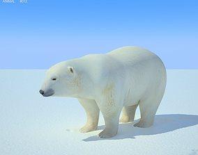 Polar Bear Ursus maritimus 3D model