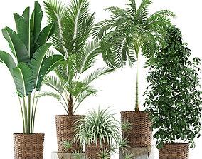 3D model Plants collection 356