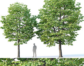 Tilia europaea Nr 2 H7-8m Two tree set alley 3D model
