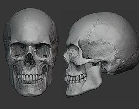 3D model Human male skull sculpt