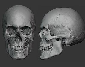 3D model Human male skull sculpt
