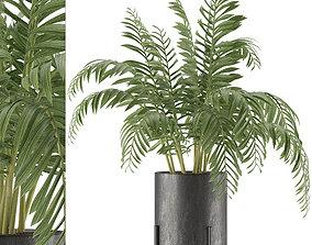 House Plant 38 3D model