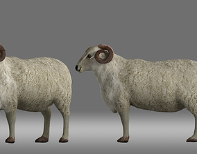 sheep poultry Animal animation role 3D