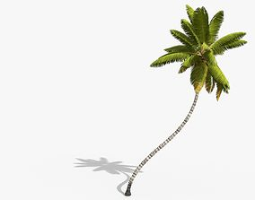 3D asset Coconut Palm Tree 11214